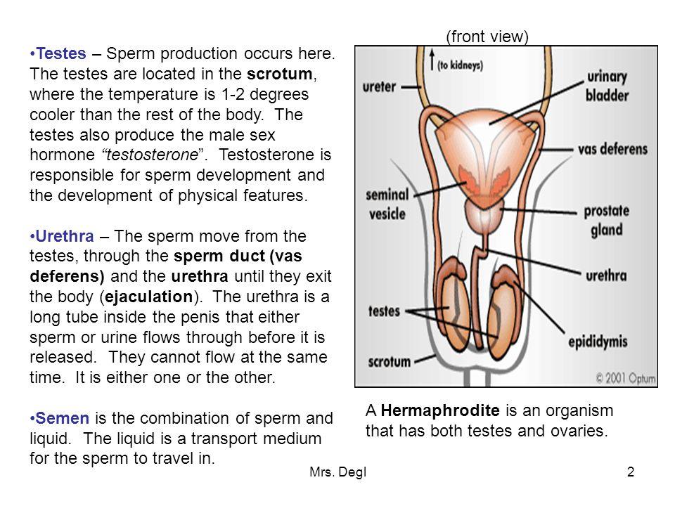 Normal sperm production, deepthroat blowjob in car video