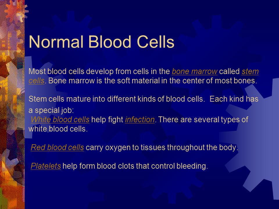 Normal Blood Cells Most blood cells develop from cells in the bone marrow called stem cells.