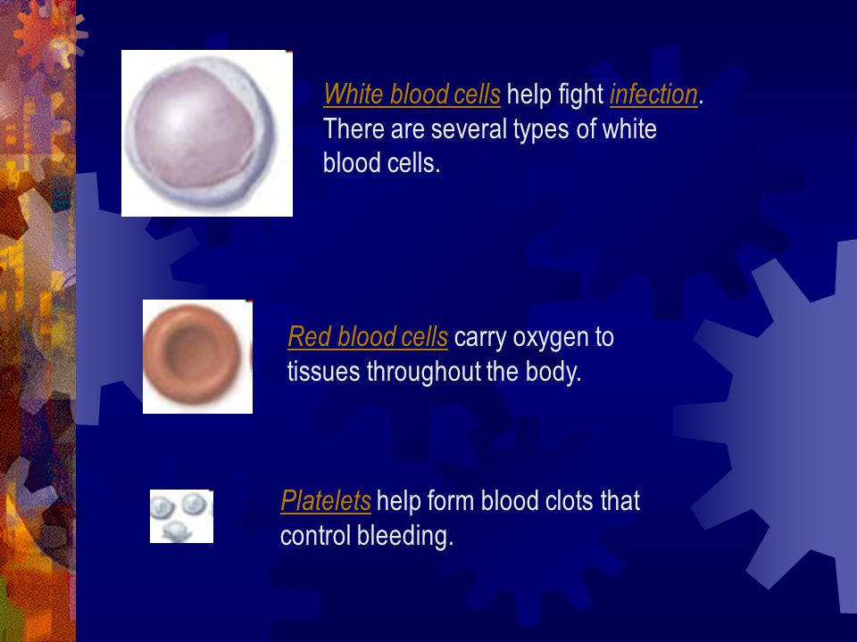 White blood cells help fight infection
