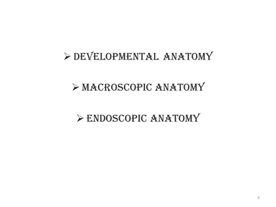 Anatomy of Internal Nose & PNS in relation to Endoscopic Surgery ...