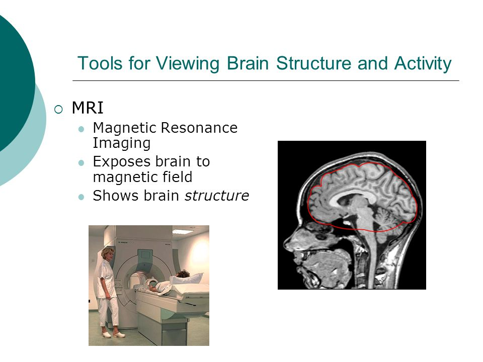 Tools for Viewing Brain Structure and Activity