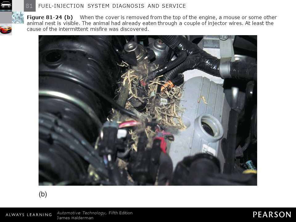 Figure (b) When the cover is removed from the top of the engine, a mouse or some other animal nest is visible. The animal had already eaten through a couple of injector wires. At least the cause of the intermittent misfire was discovered.