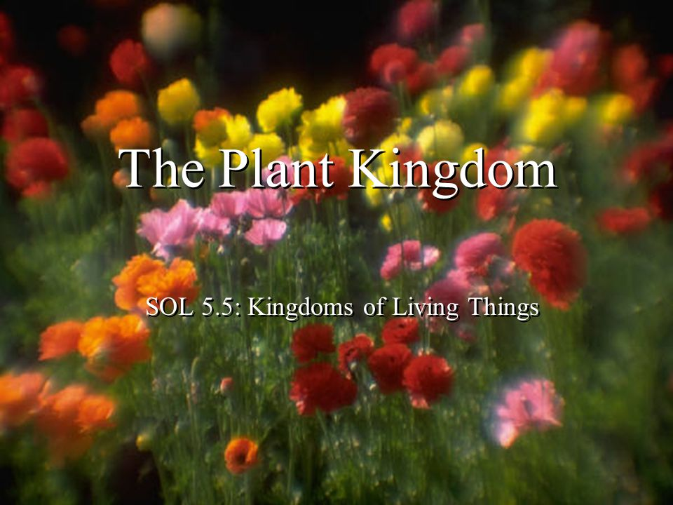 SOL 5.5: Kingdoms of Living Things