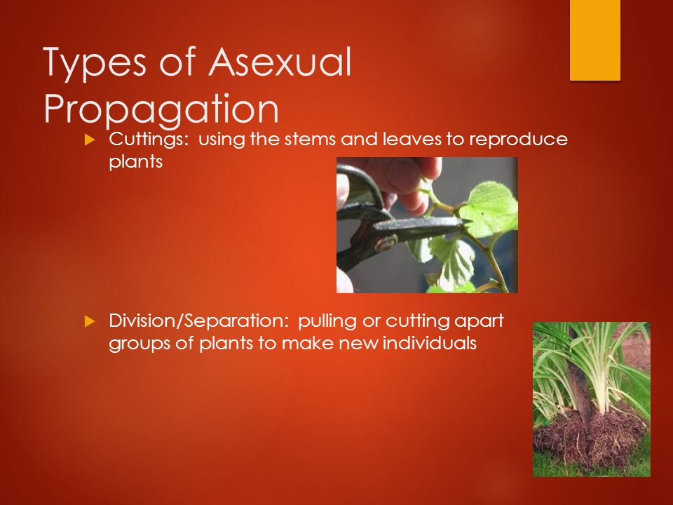 Two methods of asexual propagation