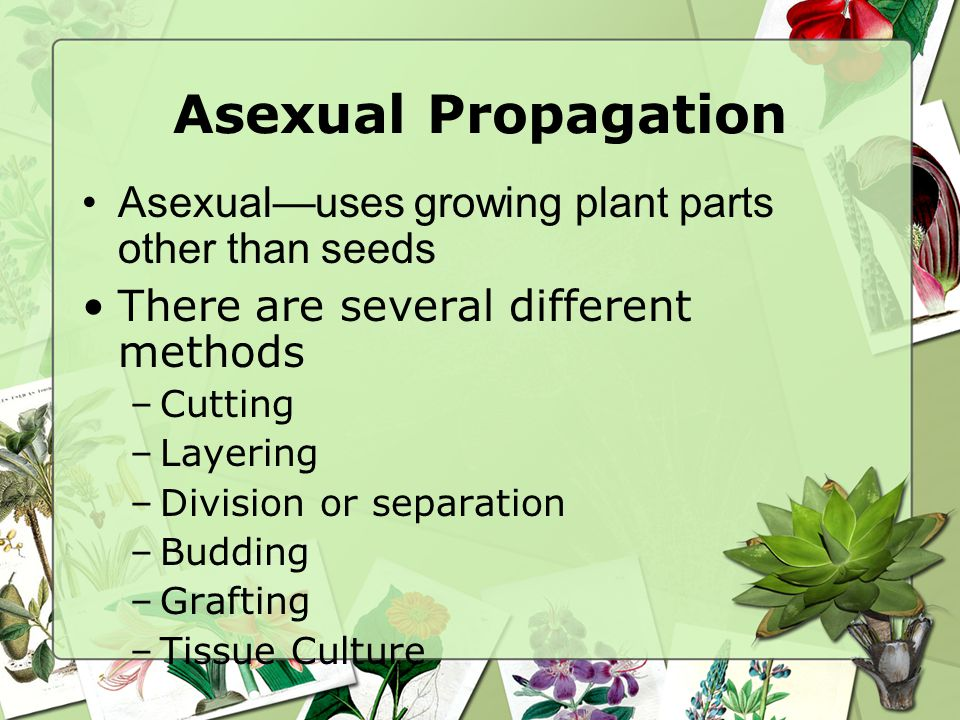Asexual reproduction plants grafting videos
