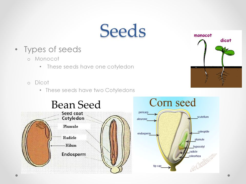 Plant Anatomy And Physiology Ppt Video Online Download