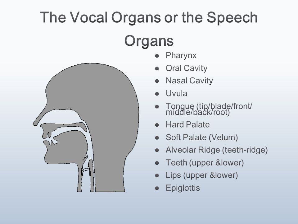 The Vocal Organs or the Speech Organs