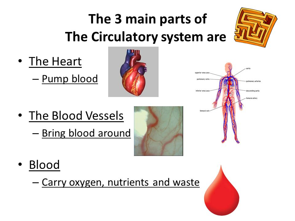 The 3 main parts of The Circulatory system are