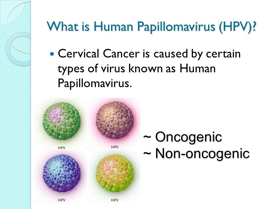 non hpv papilloma