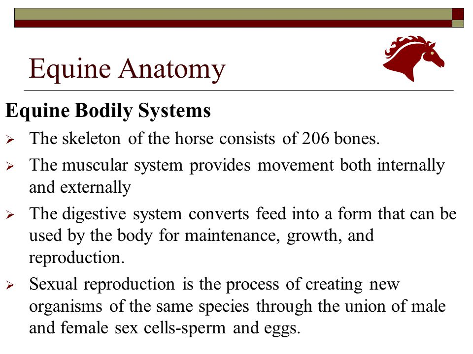 Equine Anatomy & Physiology - ppt download