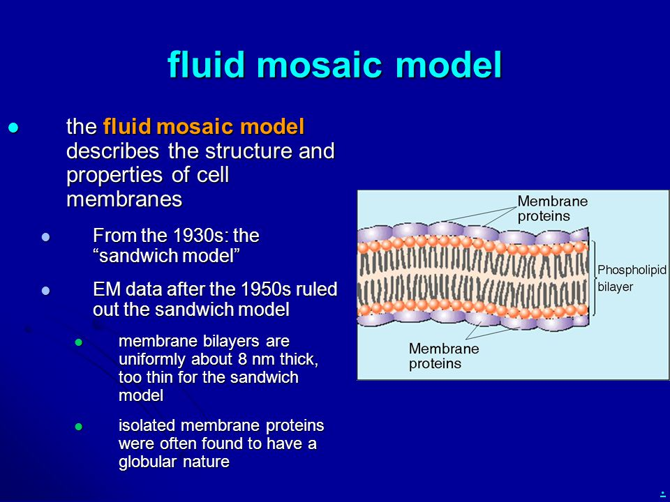 described by the fluid mosaic model