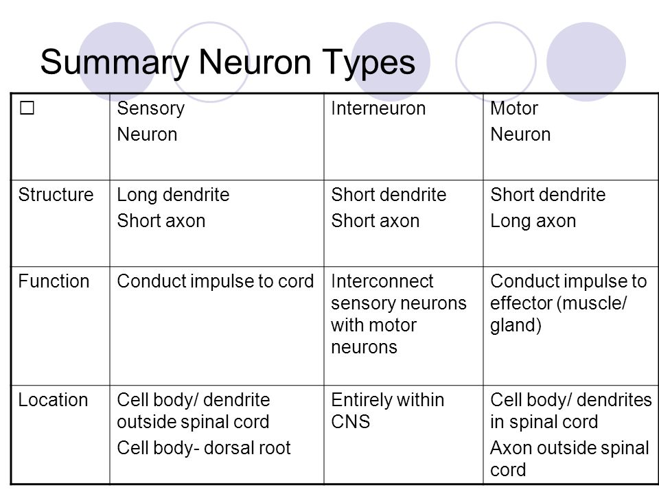 overview of neuron structural and functional Unipolar neuron – structure and functions neurons are structurally classified based on the number of processes that attached to the cell body (soma) unipolar (pseudounipolar) neurons have one process that attached to the cell body.