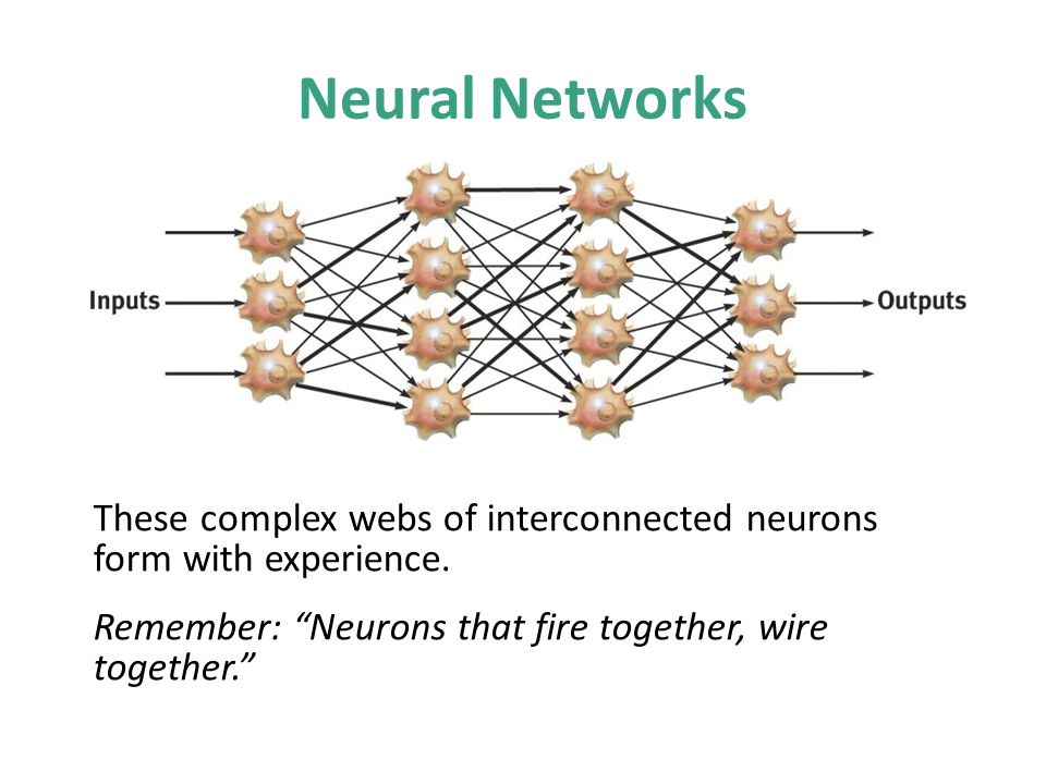 Neural Networks No animation. These neural networks are activated when needed for action.