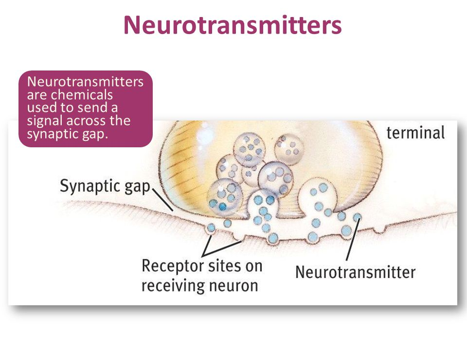 Neurotransmitters Neurotransmitters are chemicals used to send a signal across the synaptic gap. No animation.