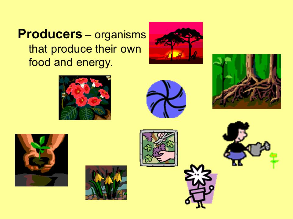 Producers – organisms that produce their own food and energy.