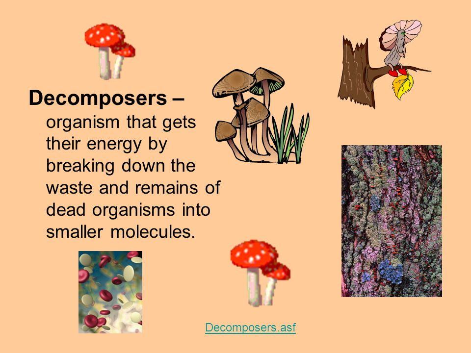 Decomposers – organism that gets their energy by breaking down the waste and remains of dead organisms into smaller molecules.
