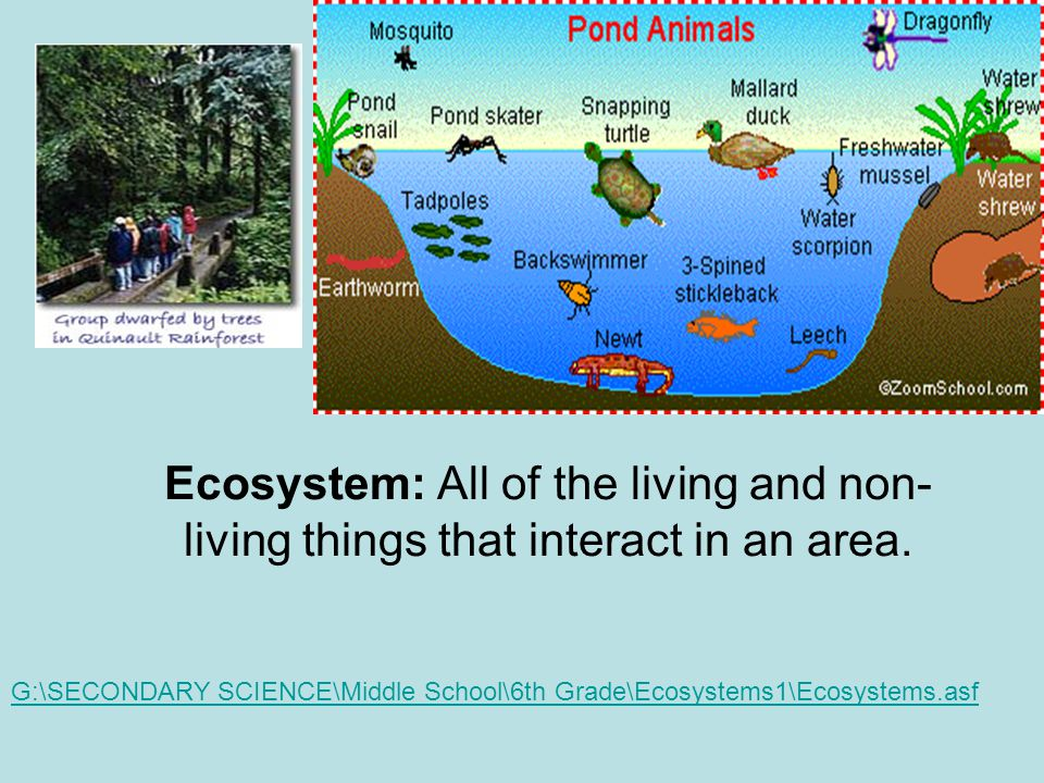 Ecosystem: All of the living and non-living things that interact in an area.