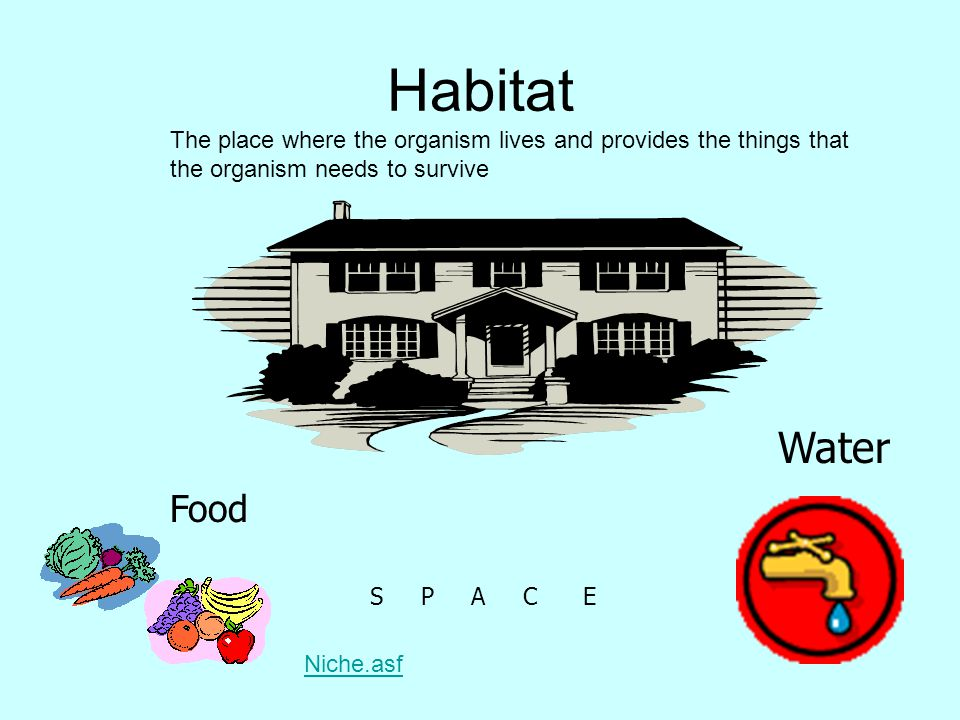 Habitat The place where the organism lives and provides the things that the organism needs to survive.
