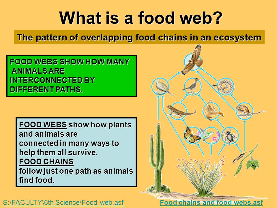 What is a food web The pattern of overlapping food chains in an ecosystem. FOOD WEBS SHOW HOW MANY.