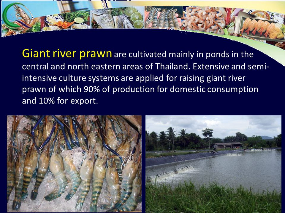 Historical development of aquaculture in Thailand - ppt