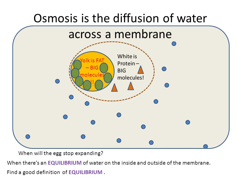 Diffusion And Osmosis Through An Egg Diagram Diy Enthusiasts