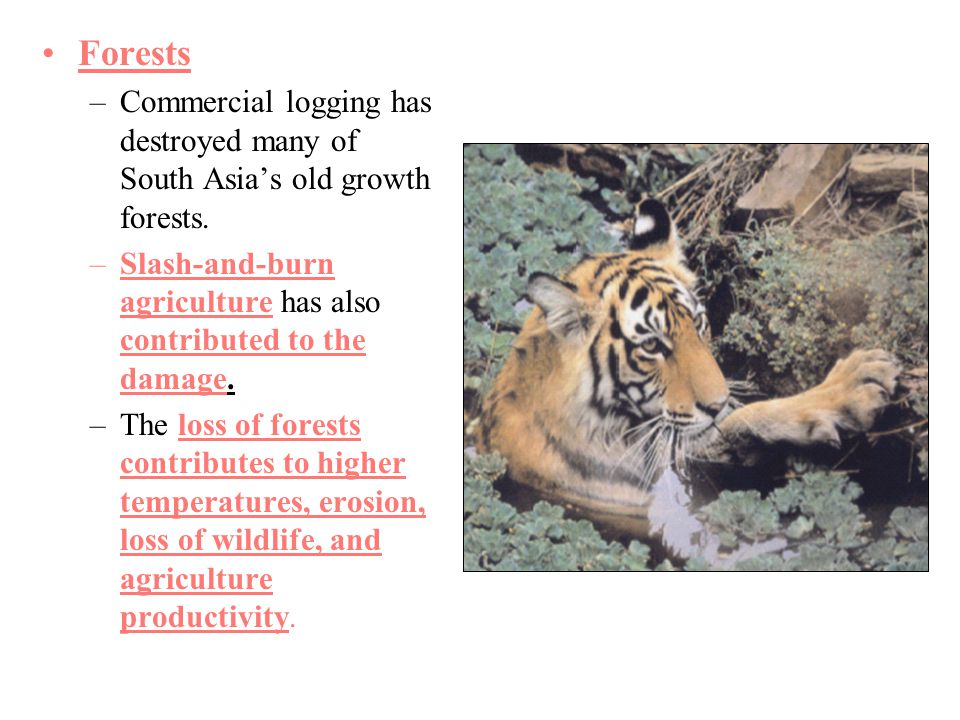 Forests Commercial logging has destroyed many of South Asia's old growth forests. Slash-and-burn agriculture has also contributed to the damage.