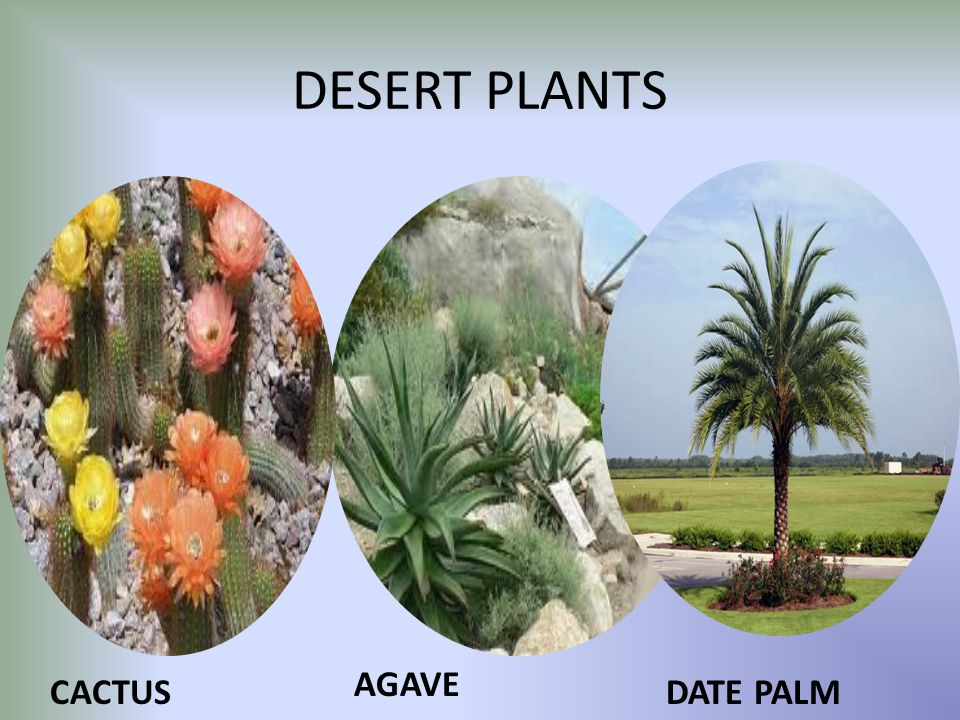 Living Organisms And Their Surroundings Ppt Video Online
