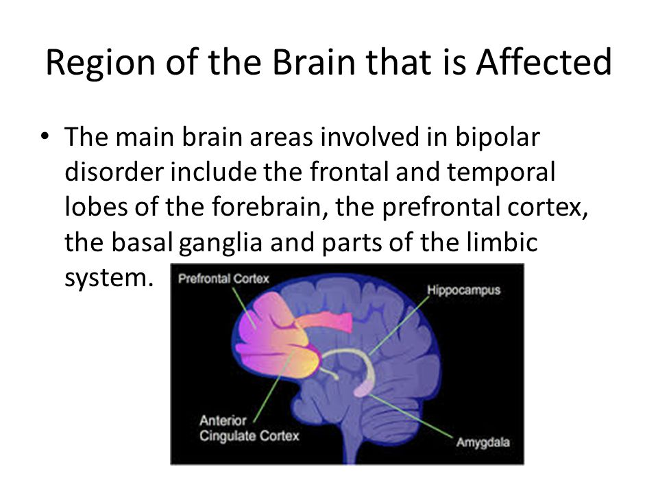 Manic depression by jason li seth horan ppt video online download region of the brain that is affected ccuart Images