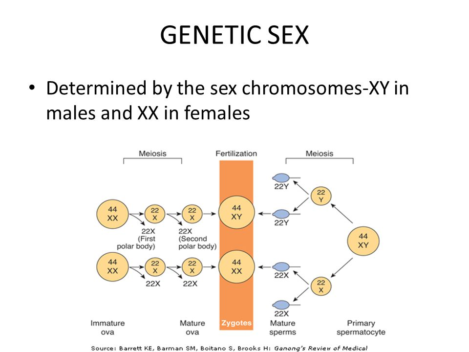 Genetic sex selection