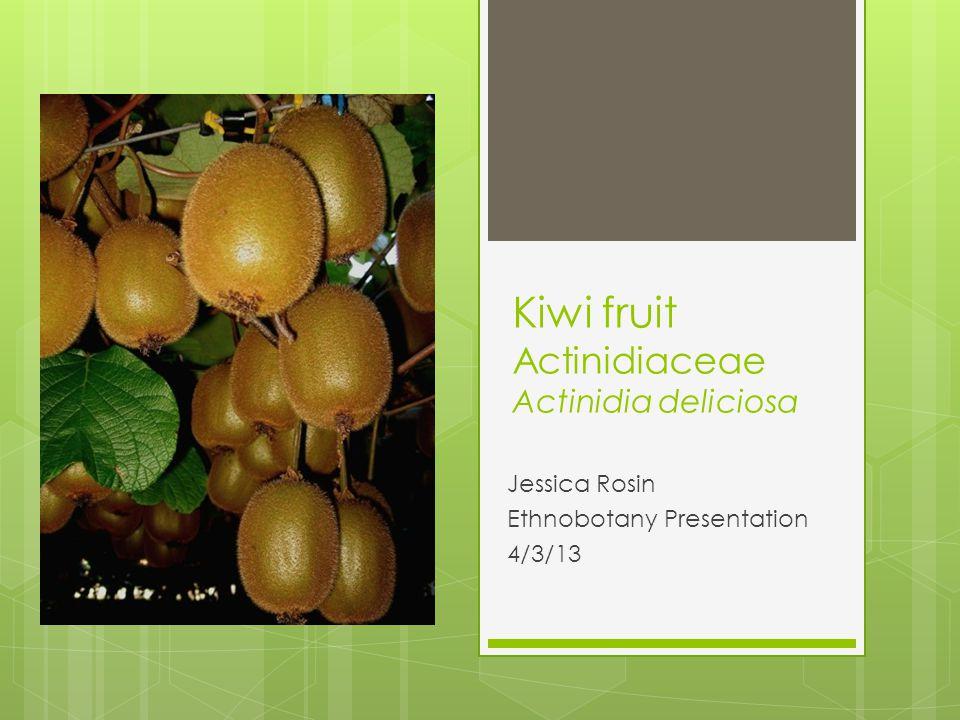 Kiwi fruit Actinidiaceae Actinidia deliciosa