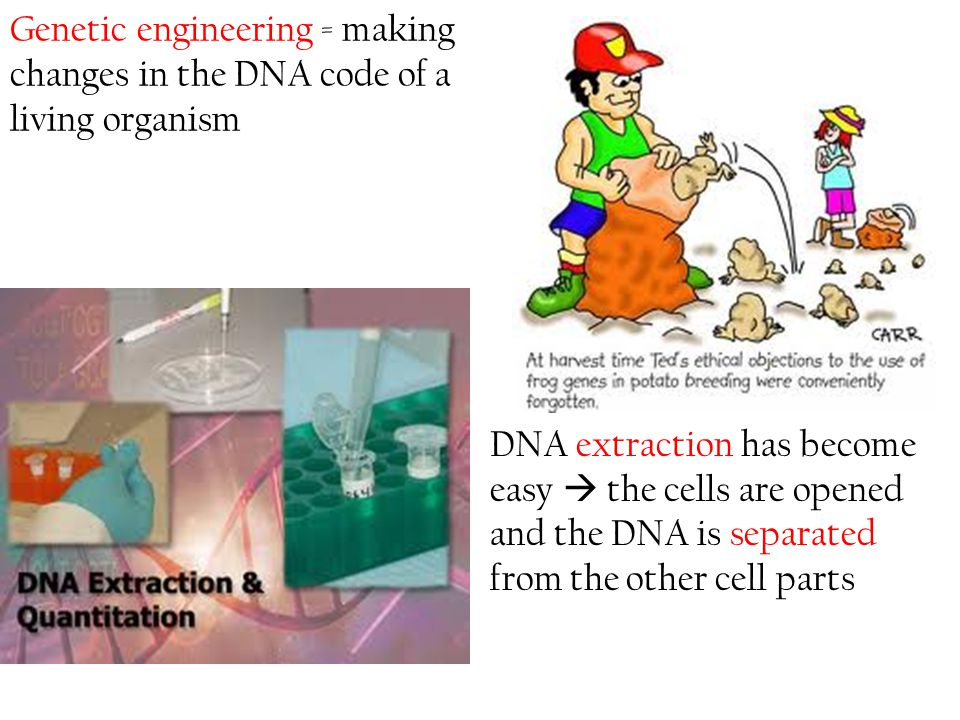 Genetic engineering = making changes in the DNA code of a living organism