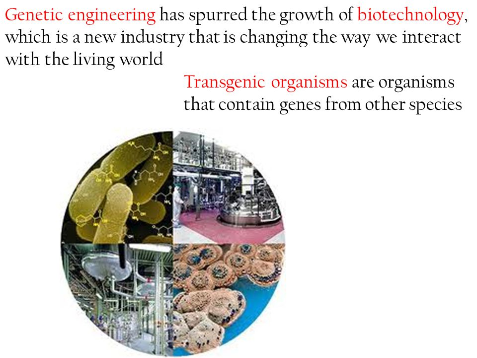Genetic engineering has spurred the growth of biotechnology, which is a new industry that is changing the way we interact with the living world