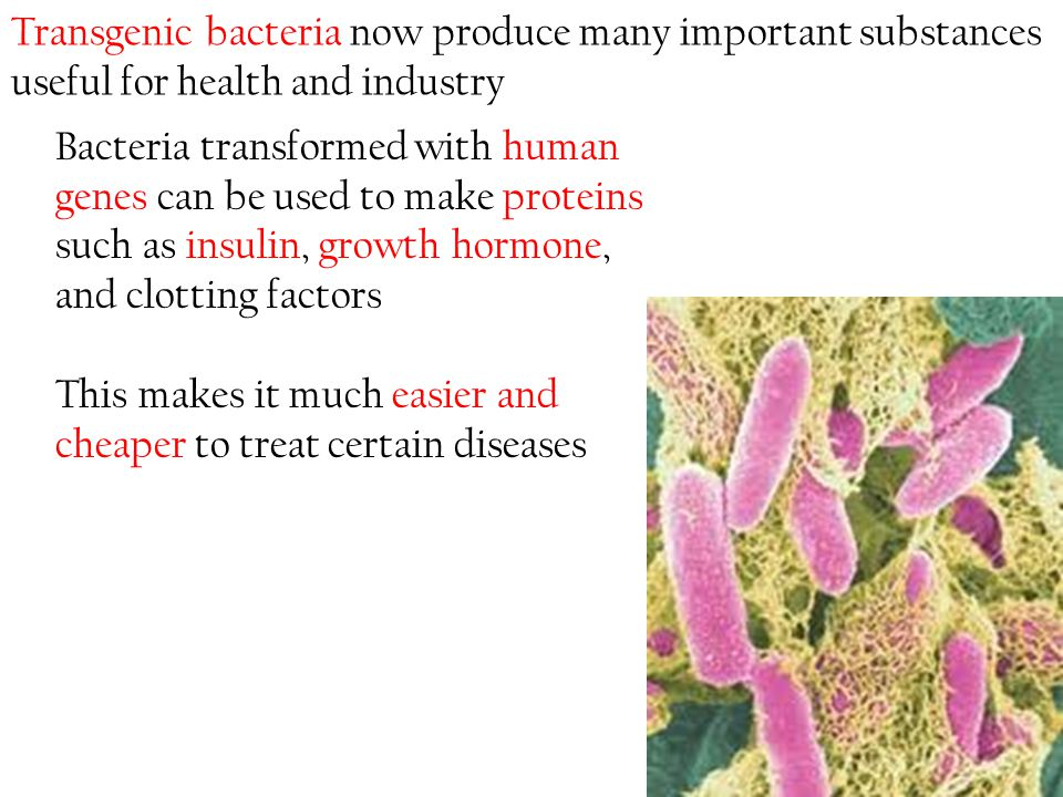 Transgenic bacteria now produce many important substances useful for health and industry