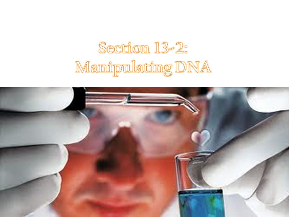 Section 13-2: Manipulating DNA