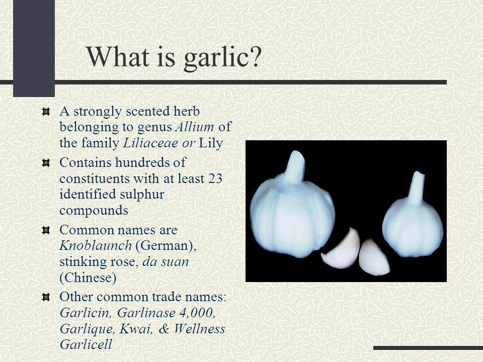 Garlic: Allium sativum - ppt video online download