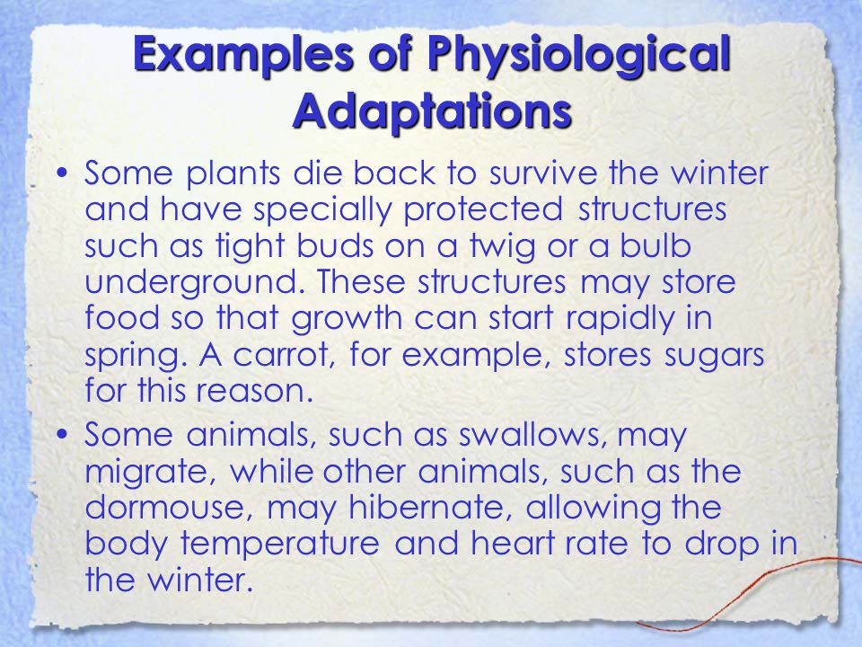 Adaptations Ppt Download