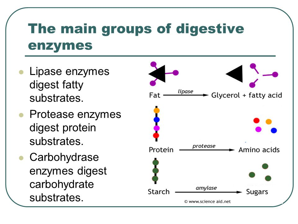 The main groups of digestive enzymes