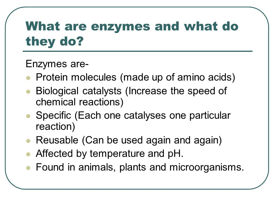 What are enzymes and what do they do