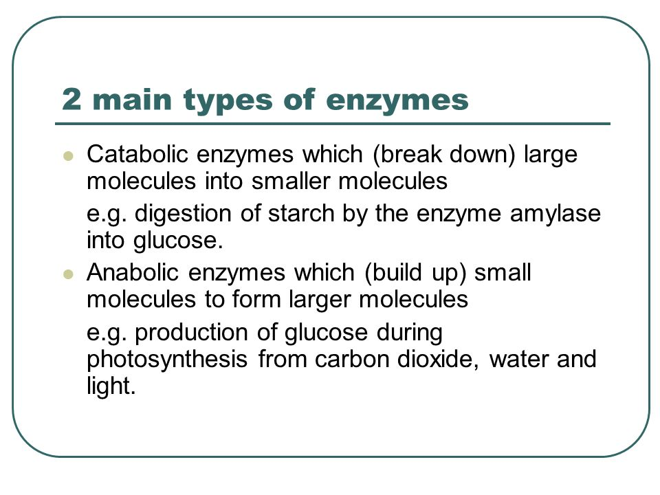 2 main types of enzymes Catabolic enzymes which (break down) large molecules into smaller molecules.