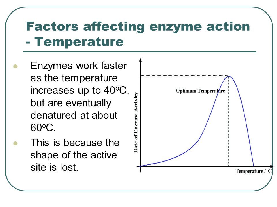 Factors affecting enzyme action - Temperature