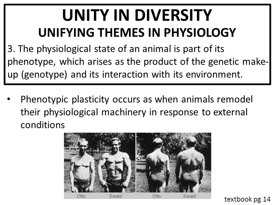 Principles of Animal Physiology - ppt video online download