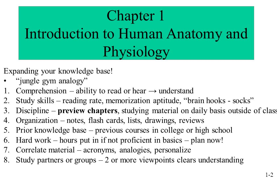 Powerpoint Lecture Outlines To Accompany Holes Human Anatomy And