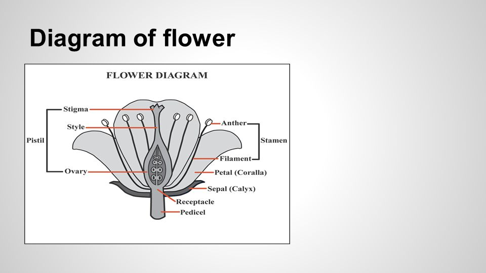 Reproduction In Plants Ppt Video Online Download