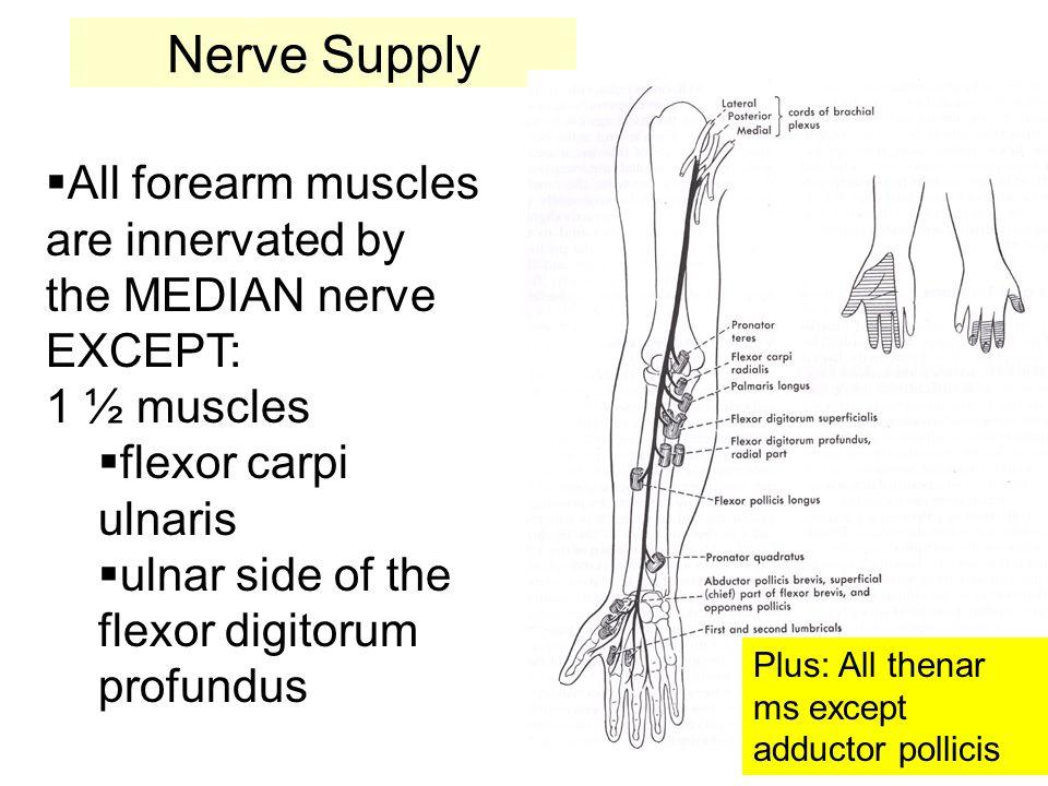 Pelvic splanchnic nerves