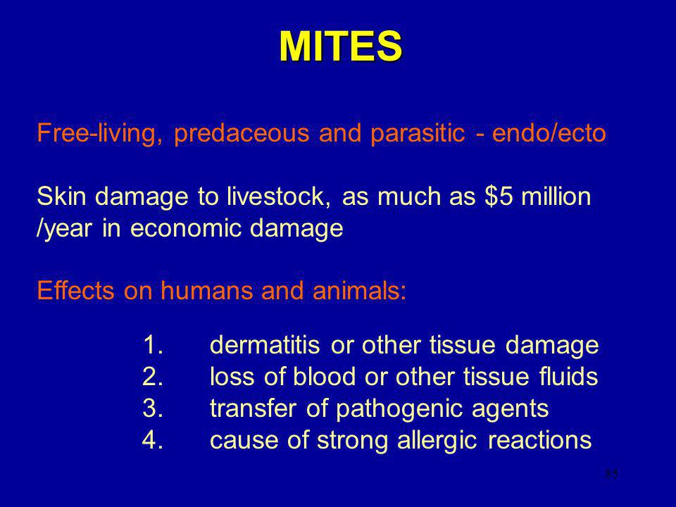 MITES Free-living, predaceous and parasitic - endo/ecto
