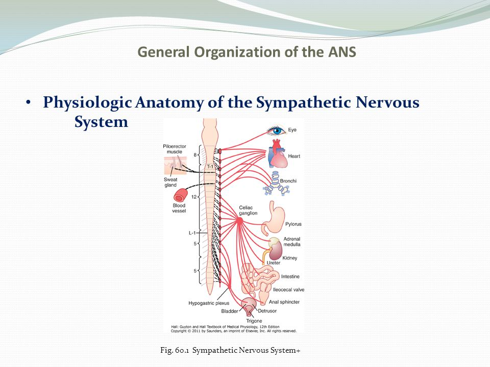 Chapter 60 The Autonomic Nervous System And The Adrenal Medulla