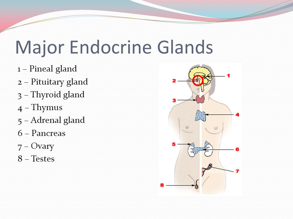 Endocrine Disorders  - ppt video online download