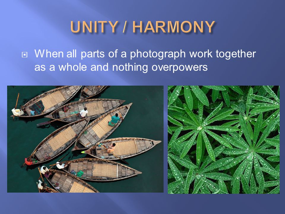 UNITY / HARMONY When all parts of a photograph work together as a whole and nothing overpowers