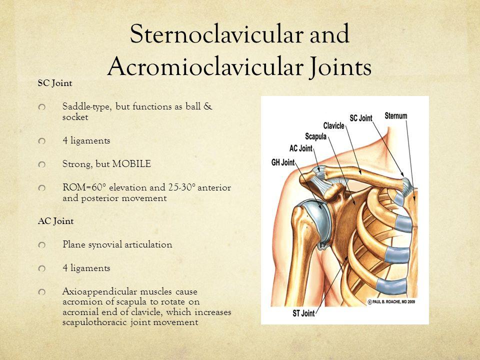 Shoulder Biomechanics - ppt video online download