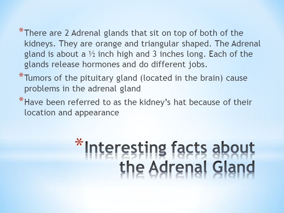 Interesting facts about the Adrenal Gland